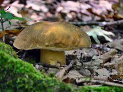 Советы грибникам. Где растут грибы в Крыму и как отличить хорошие грибы от ядовитых?5c5b5c56f11bb